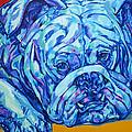 Bulldog Blues by Derrick Higgins