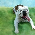 Bulldog by Colleen Taylor
