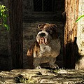 Bulldog In A Doorway by Daniel Eskridge