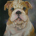 Bulldog Puppy by Jack No War