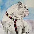 Bulldog by Jeremy Martinson