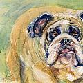 Bulldog by Judith Levins