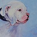 Bulldog Pup by Judy Fischer Walton