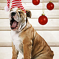 Holiday Bulldog Puppy  by John Daniels Paul Brown Jeff Ried