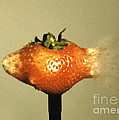 Bullet Piercing A Strawberry by Gary S. Settles