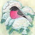 Bullfinch by Anna Folkartanna Maciejewska-Dyba