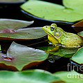 Bullfrog by Jim Zipp