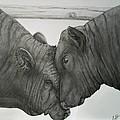 Bullheaded by Adrienne Giljam