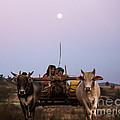 Bullock Cart Under Full Moon - Burma by Matteo Colombo