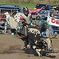 Bullrider by Kris Wolf