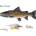 Bulltrout And Grey Ghost Fly by Daniel Lindvig