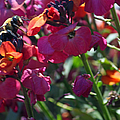 Bumble Bee Among The Wallflowers IIi by Suzanne Gaff