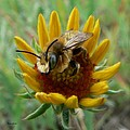 Bumble Bee Beauty by Barbara St Jean