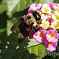 Bumble Bee by Kara Duffus
