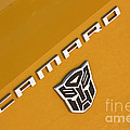 Bumble Bee Logo-7938 by Gary Gingrich Galleries