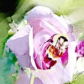 Bumble Bee On Rose by Elaine Weiss