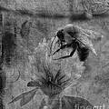 Bumble Bee Post Card 2 Bw by Lesa Fine
