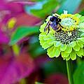 Bumble Bee by Sennie Pierson