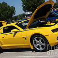 Bumble Bee Side View 7904 by Gary Gingrich Galleries