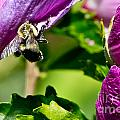Bumble Bee Vii by Ms Judi