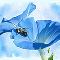Bumblebee And Blue Morning Glory by Mother Nature
