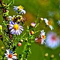 Bumblebee Delight by Tyson Kinnison