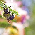 Bumblebee Disco by Jason Politte