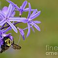 Bumblebee by Olga Hamilton
