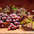 Bunch Of Grapes by Bruno D'Andrea