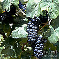 Bunch Of Grapes by Heiko Koehrer-Wagner