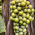 Bunch Of Grapes by Jerry Gammon