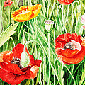 Bunch Of Poppies IIi by Irina Sztukowski