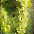 Bunch Of Yellow Grapes by Barbara Orenya