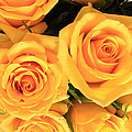 Bunch Of Yellow Roses by Robert Hamm