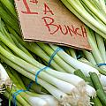Bunches Of Onions by Teri Virbickis