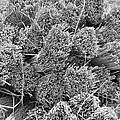 Bundled Dried Grass by Herman Cloete