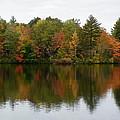 Bunganut Lake Foliage 4 by Lynne Miller