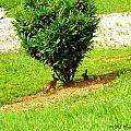Bunnies In A Bush by Walter Rickard