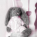 Bunny by Anne Costello