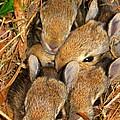 Bunny Babies by Patti Whitten