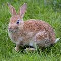 Bunny by David Hare