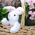 Bunny In A Basket by Kathleen Struckle