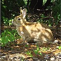Bunny In The Wild 2 by Sara  Raber