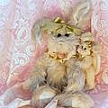 Bunny Lace by Robin Lynne Schwind