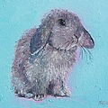 Bunny Rabbit by Jan Matson