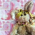 Bunny Rose by Robin Lynne Schwind