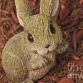 Bunny by William Norton