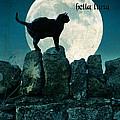 Buona Sera Bella Luna by Jill Battaglia