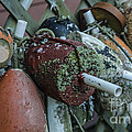 Buoy Bundle by Terry Rowe