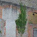 Window With Ivy by Cheryl Miller